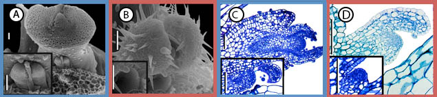 micrographs